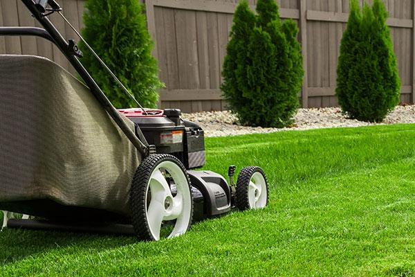jardinage, entretien de jardin, débroussaillage, taille de haie, arrosage jardin, vaucluse, alpilles, luberon, gardening, garden care, brush cutting, hedge trimming, garden watering